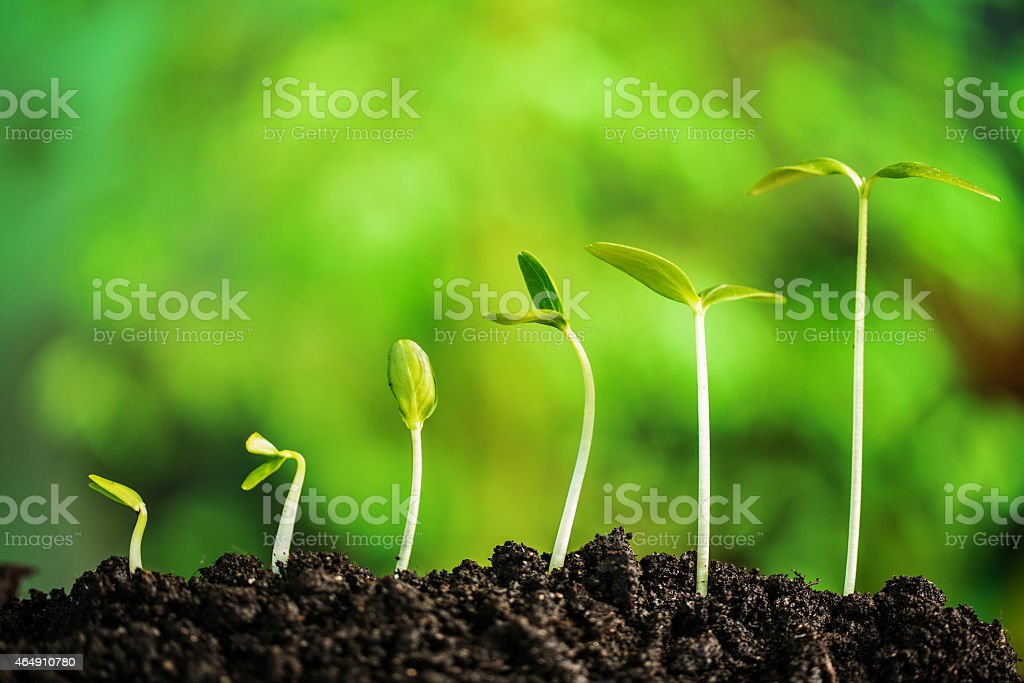 Plant-New life stock photo