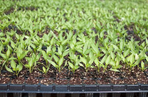 486530452 istock photo Plant-New life 655728784