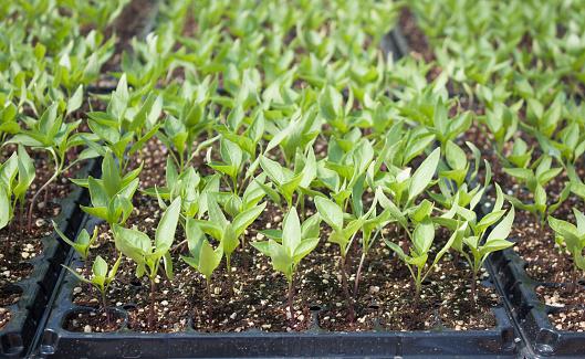 486530452 istock photo Plant-New life 655728794