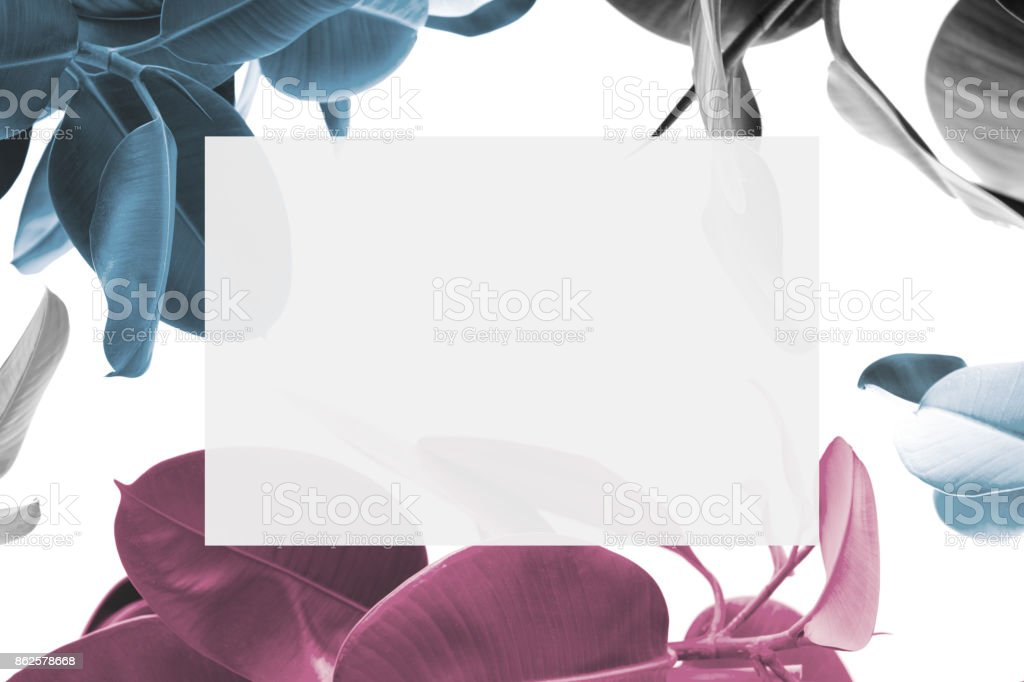plants and blank card stock photo