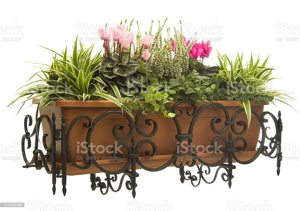 Plants and cyclamen pot in wrought iron hanger stock photo
