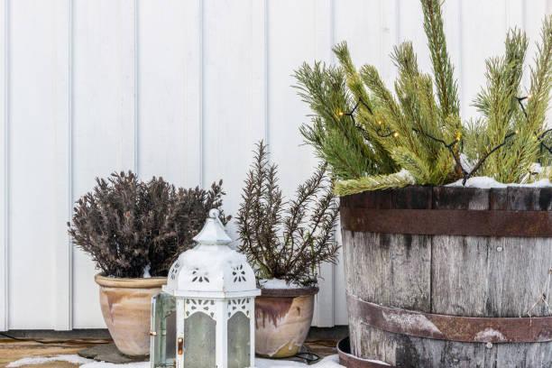 Pflanzen und Dekoration vor Haus im winter – Foto