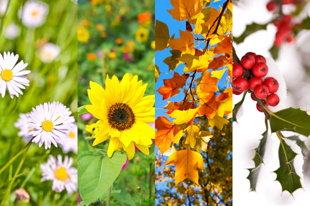 plants and flowers in spring, summer, autumn, winter, photo collage, four seasons concept - four seasons stock photos and pictures