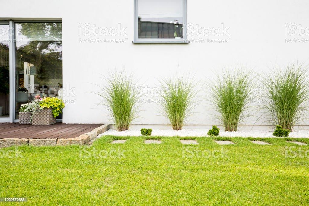 Plantas Y Hierba Verde En La Terraza De La Casa Blanca Con