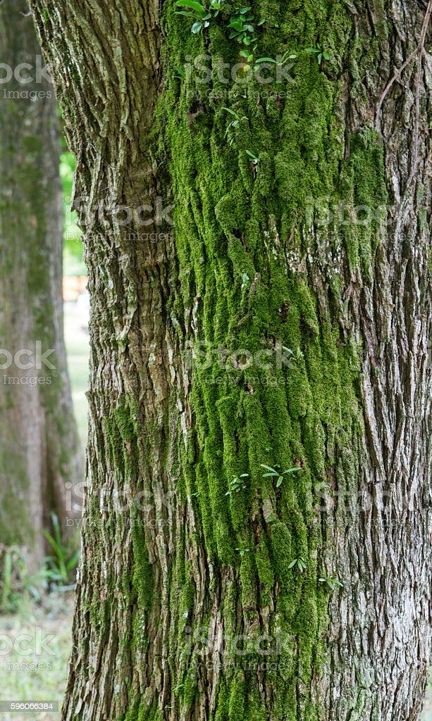 Plants and moss grow on bark tree royalty-free stock photo