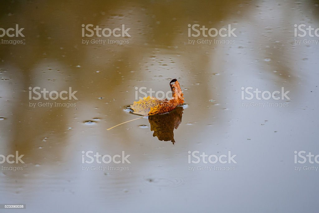 Plants and Nature - Brown Leaf Floating stock photo