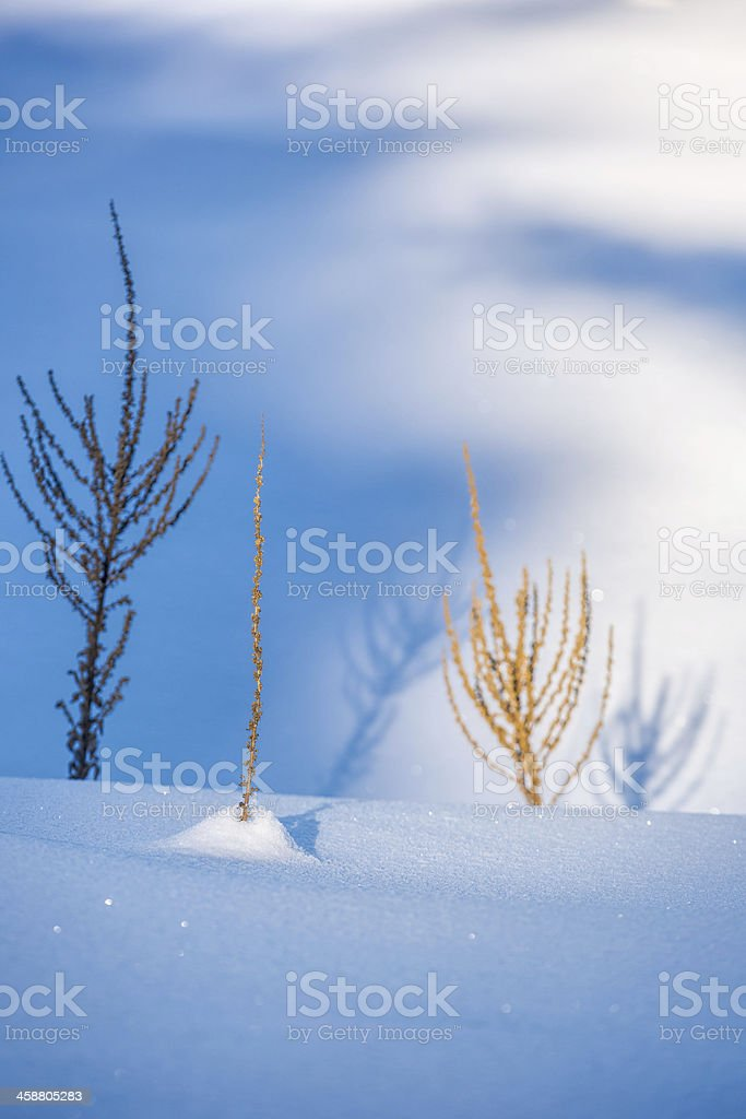 Plants and Sunlight on Snow royalty-free stock photo