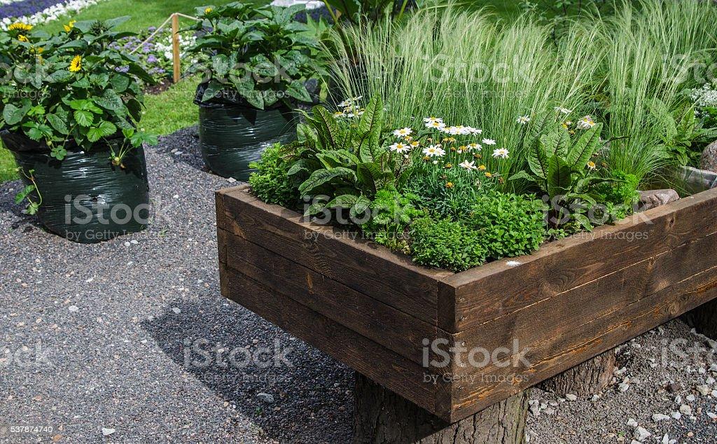 Pflanzen und Gemüse angebaut im Holzkiste, Nahaufnahme – Foto