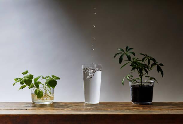 pflanzen und wasser - tropfenblatt tisch stock-fotos und bilder