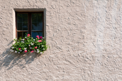 Potted plants outside a window in summer time; copy space on wall.