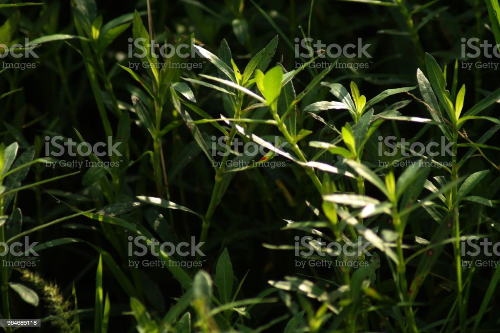 Plants at Morning royalty-free stock photo