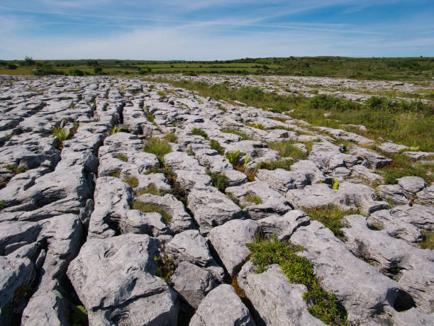plants between rocks with grooves and crevices - the burren stock pictures, royalty-free photos & images