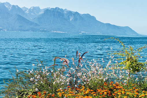 Plants bloom at the promenade of Geneva Lake in Montreux, Swiss Riviera
