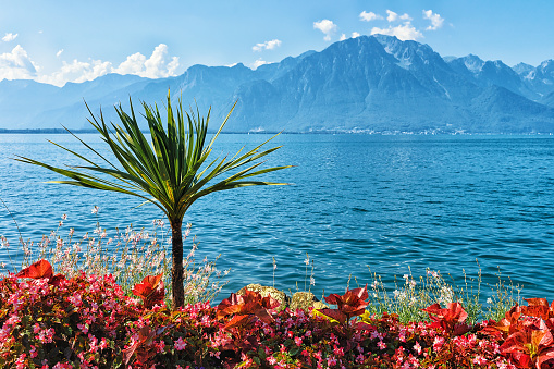 Plants blooming at the promenade of Geneva Lake in Montreux, Swiss Riviera