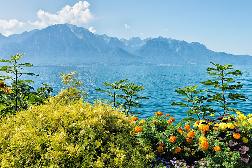 Plants blossom at the promenade of Geneva Lake in Montreux, Swiss Riviera