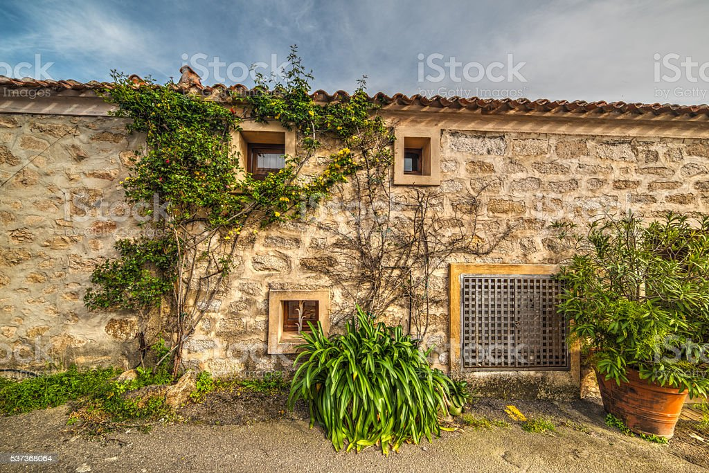 plants by a rustic wall in Sardinia stock photo