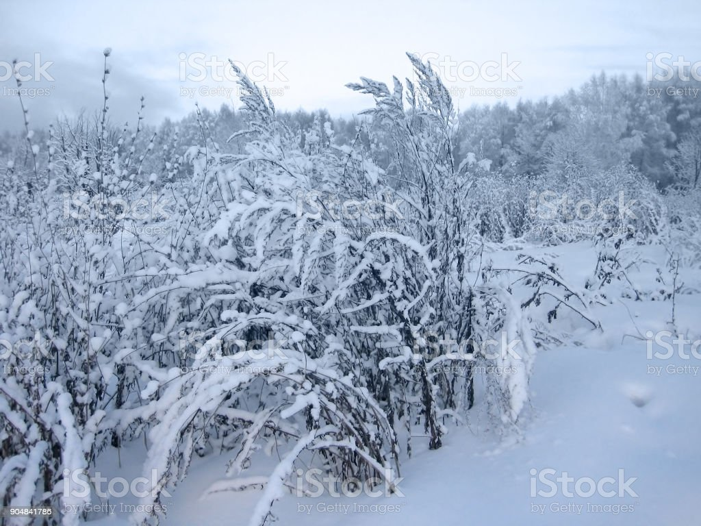 Plants covered with a snow stock photo