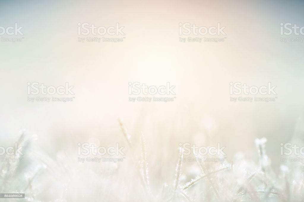 Plants covered with frost stock photo