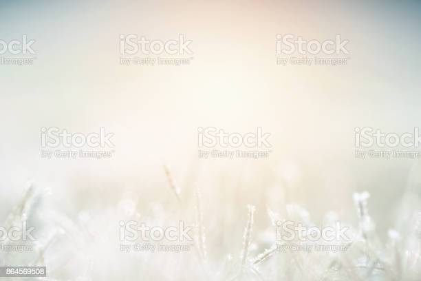 Photo of Plants covered with frost