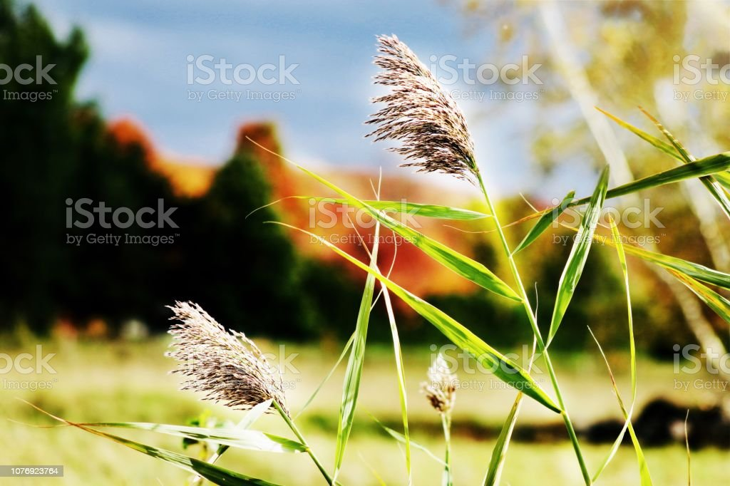 Plants fields stock photo