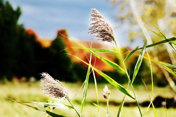 champs de plantes - josianne toubeix photos et images de collection