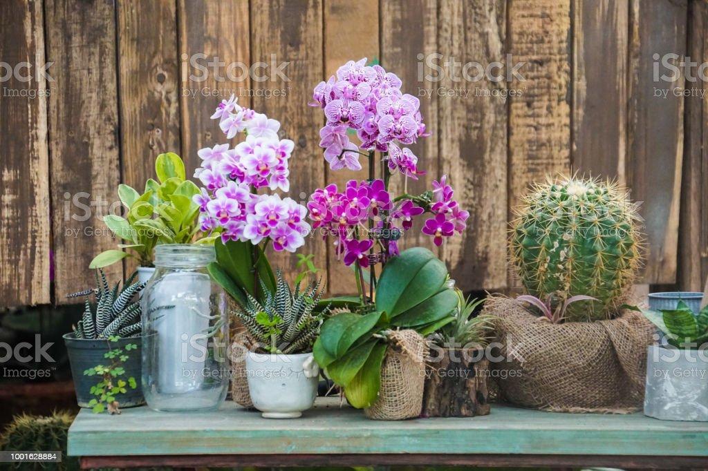 Pflanzen Blumen Dekoration Auf Tisch Orchideen Kakteen In Topfen Aus