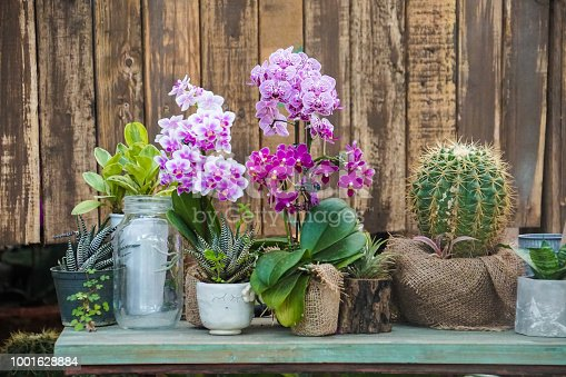 plants flowers decoration on table, orchid, cactus in pots wooden background