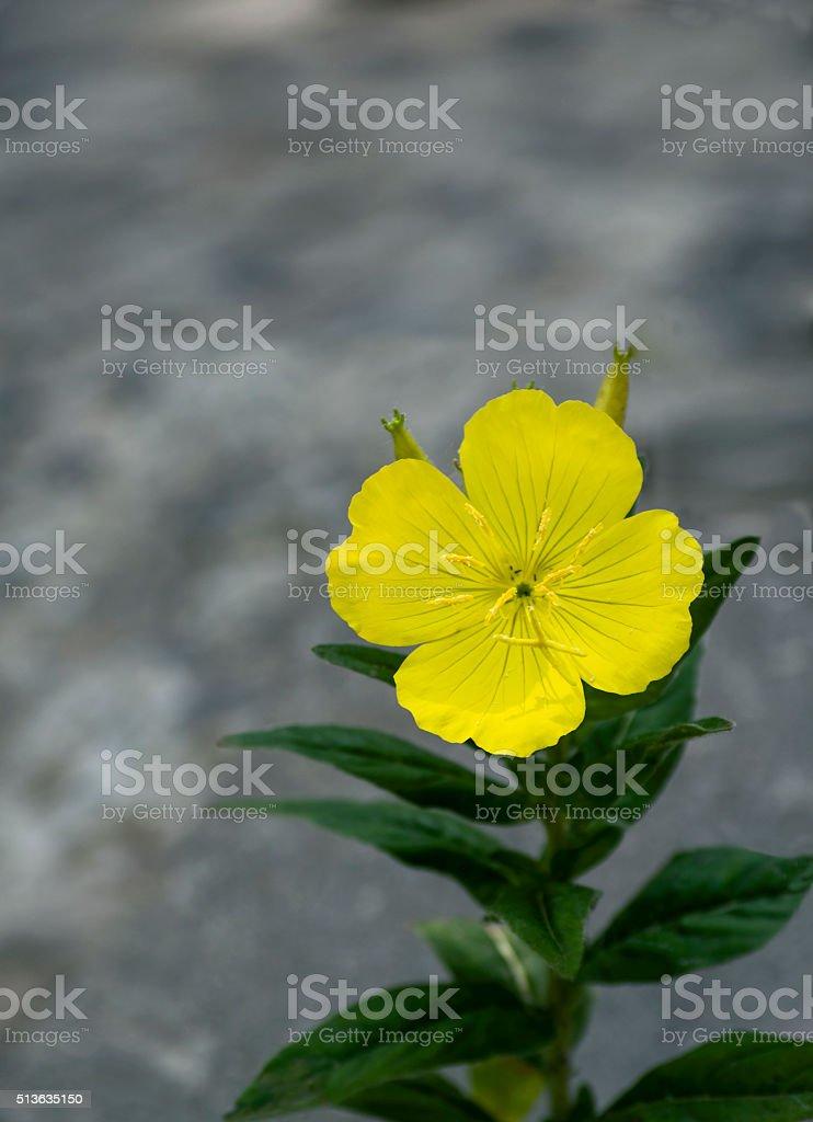 Plantas Y Flores De Primavera Nocturna En Primer Plano Macro