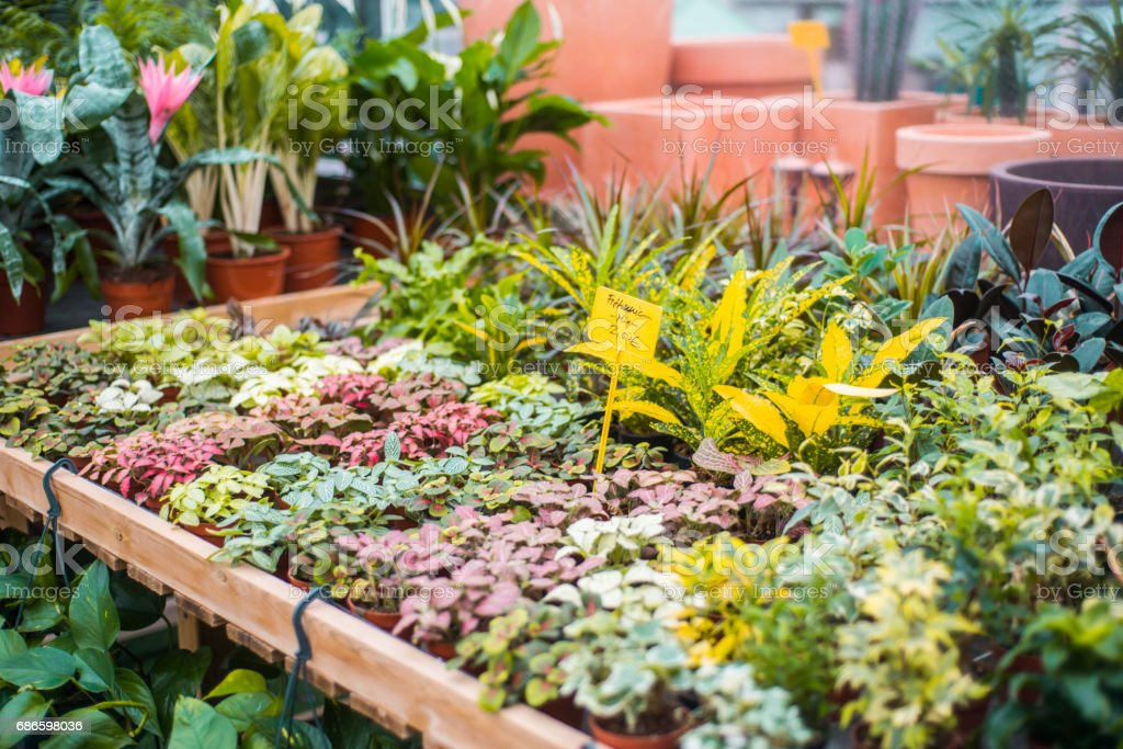 Plants for sale royalty-free stock photo
