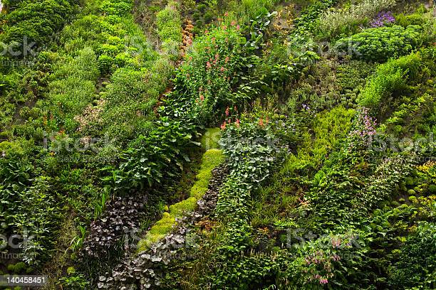 Plants Garden Stock Photo - Download Image Now