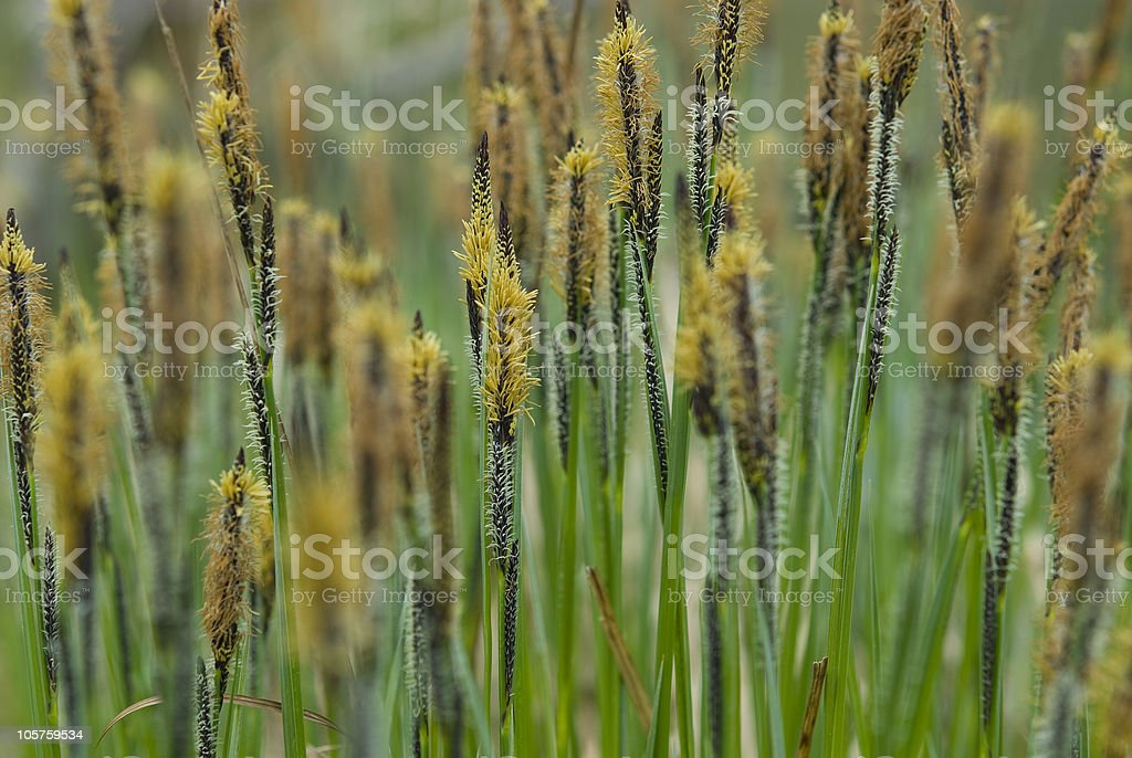 Plants - Gras near a pond royalty-free stock photo