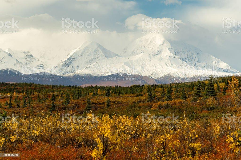 Plants Ground Cover Change Color Alaska Mountains Autumn Season stock photo