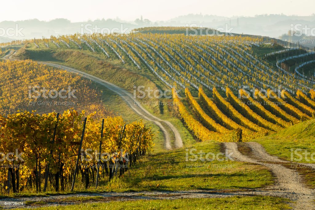 Plants growing in a row at vineyard stock photo