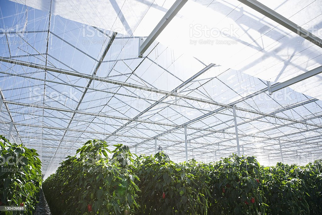 Plants growing in greenhouse stock photo