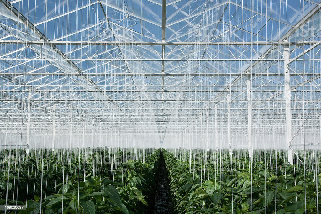 Plants growing in greenhouse royalty-free stock photo