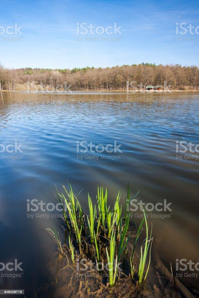 Plants growing in the Bukovnisko lake, Prekmurje, Slovenia. stock photo