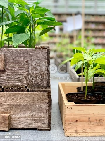 Small plants growing in wooden boxes