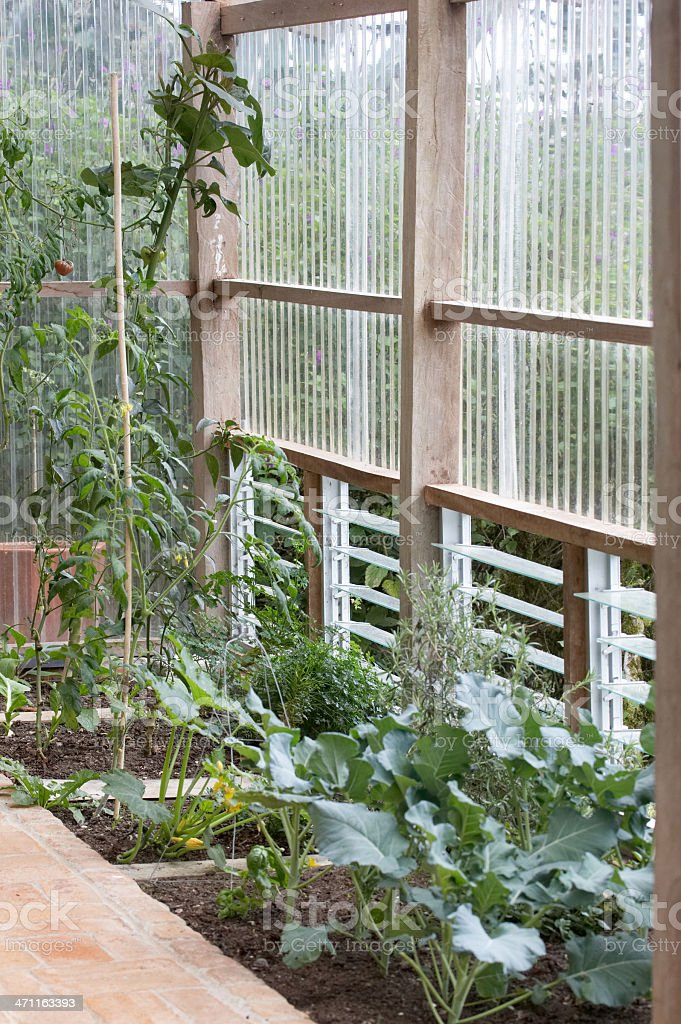 Plants growing inside a glasshouse royalty-free stock photo