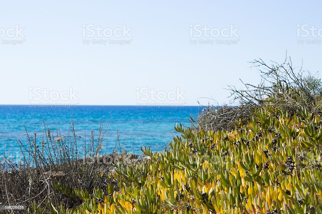 plants growing near the sea are the most envied foto royalty-free