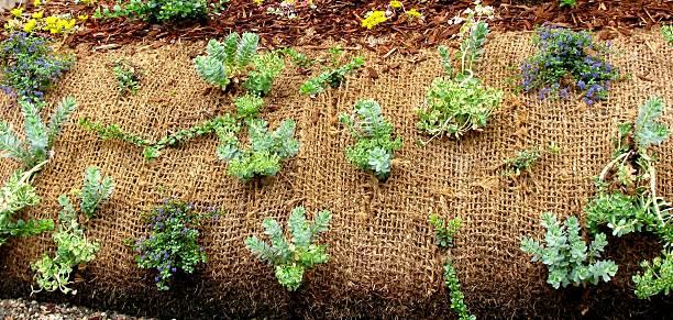 Plants growing through landscape fabric stock photo