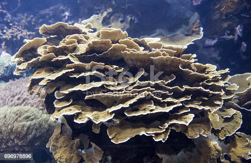 istock Plants in aquarium, Valencia, Spain 696978896