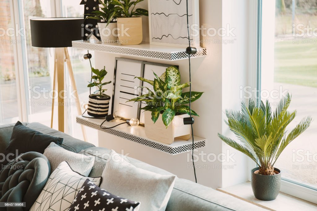 Plants in cosy living room