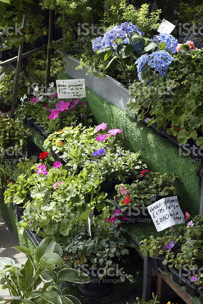 Plants in Florists Shop London royalty-free stock photo