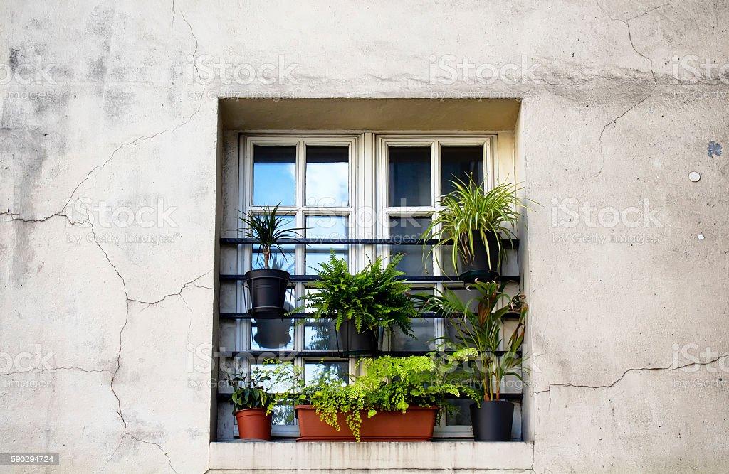 Plants in front of window in Paris royaltyfri bildbanksbilder