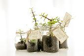 石工の jar ファイルの植物