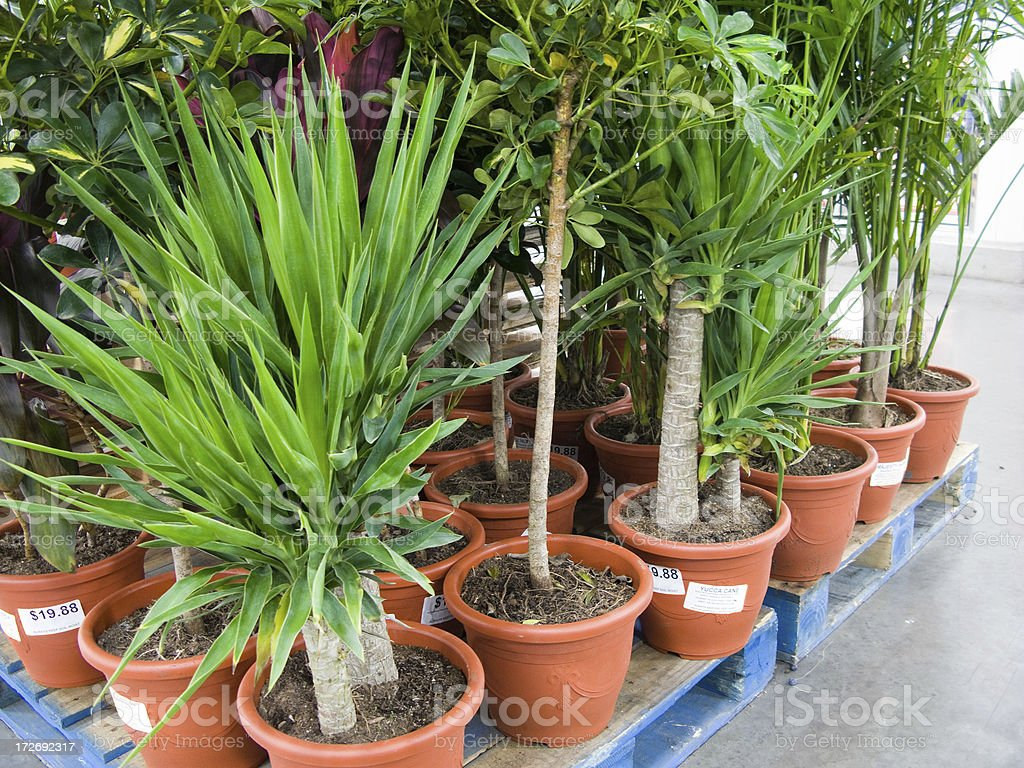 Plants in Nursery royalty-free stock photo