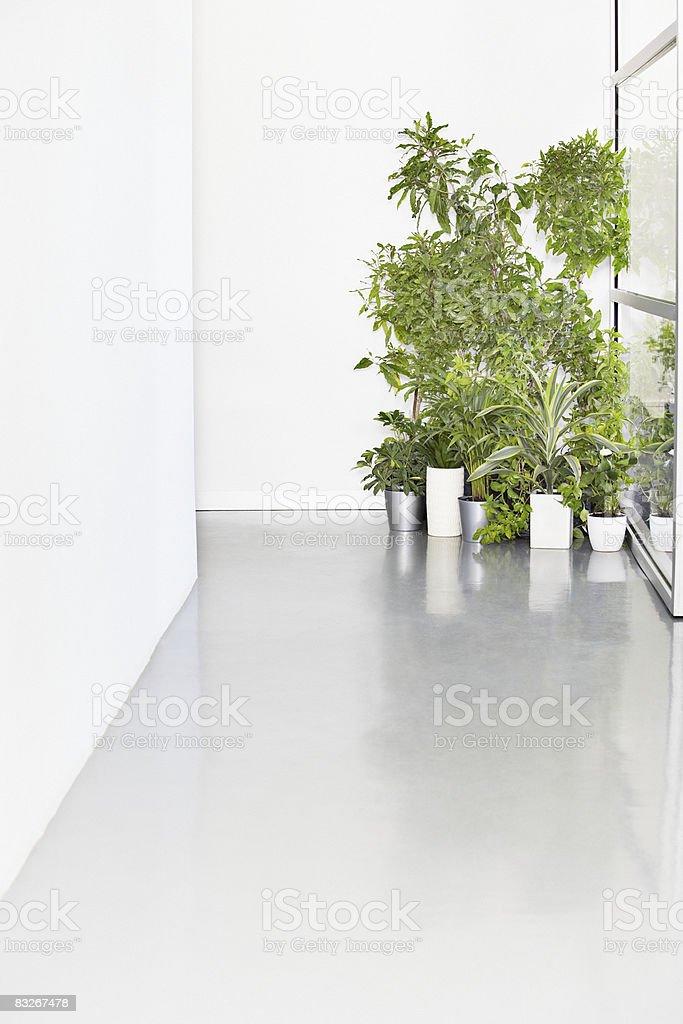 Pflanzen in Büro-Korridor Lizenzfreies stock-foto