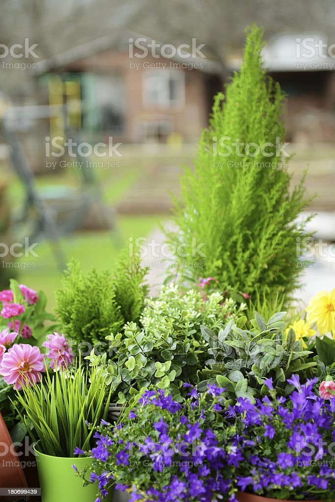 plants in pots royalty-free stock photo
