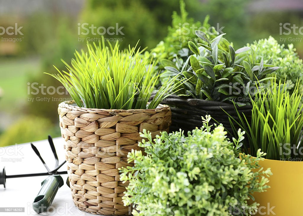 plants in pots stock photo