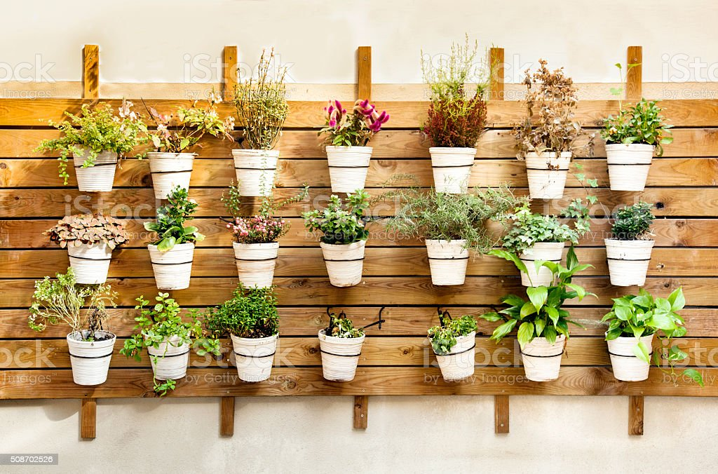 Plants in pots wall mount
